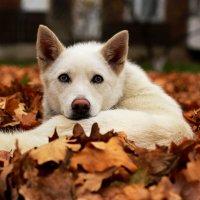 Осенний жалкий взгляд..... :: Анна Шишалова