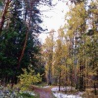 осенний лес :: Владимир