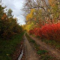 Разноцветная осень. :: Victor Klyuchev