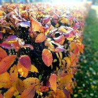Осенняя палитра :: Светлана Дунаева