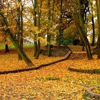 Осень пришла :: Сергей Карачин