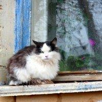 Загрустила  кошка у окошка, неуютно кошкам в ноябре... :: Андрей Заломленков