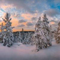 Сосны в снегу :: Фёдор. Лашков