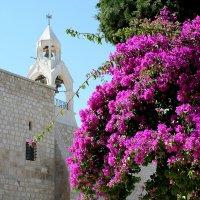 Палестинская бугенвиллея :: Елена Даньшина