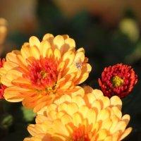 Цветы :: Алексей Р.