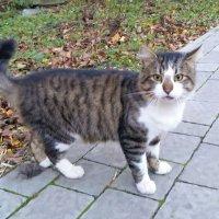 Просто кот на улице... :: Marina Pr. **