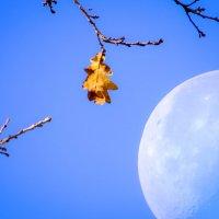 Осень и луна :: SVetlana Veter