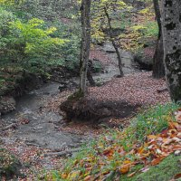 Осенний лес. :: Vladimir Lisunov