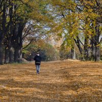 Дорога в осень :: Alexandеr P