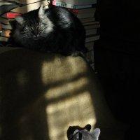 Муря и Серый. :: Эника.