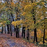 Осень :: Игорь Мукалов
