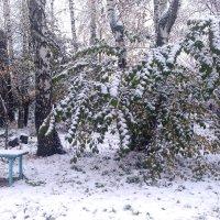 Лавочка в парке... :: Дмитрий Петренко