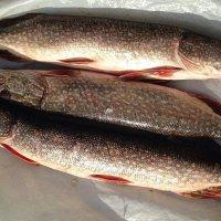 После рыбалки :: alers faza 53