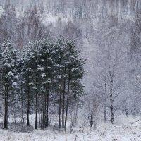 Северный ноябрь :: Лена .