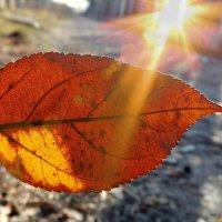 Каждый лучик солнца в ноябре - праздник! :: Андрей Заломленков