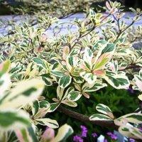 Листья-бабочки. :: Андрий Майковский