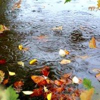 Мокрая осень :: Marina Pelymskaya