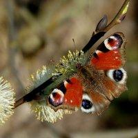опять про бабочек...2 :: Александр Прокудин