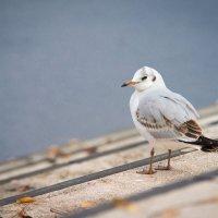 Неизвестная птичка в Шверине :: Алексей Селивёрстов