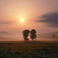 два дерева в тумане :: Elena Wymann