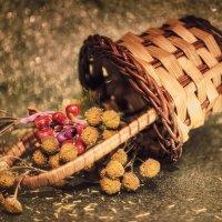 Autumn still life :: Игорь Сарапулов