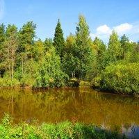 Водоём среди леса :: Андрей Снегерёв