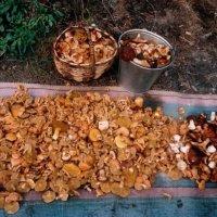 лесной урожай! :: Иван Карташов (Ivanes)