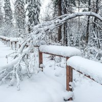 Зима пришла в гости к нам..... :: Виктор