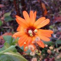 Стойкий цветок :: Андрей Снегерёв