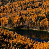 Лесное озеро Учкель. Улаганское нагорье. :: Salamon2005