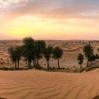 Джип сафари в Аравийской пустыне :: Светлана Карнаух
