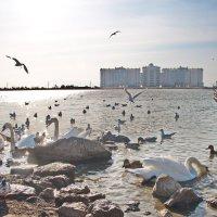 На крымских берегах :: Алексей Михалев