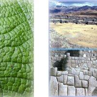 сравните макро в растение и строительство археологического памятника Саксахуаман :: Георгий А
