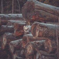 спиленные деревья :: Андрей