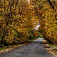 Золотая осень. :: Владимир Ф