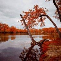 Осень :: Gene Brumer
