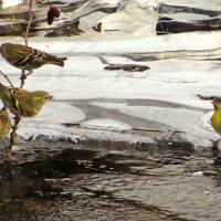 Чижи у воды :: Андрей Снегерёв