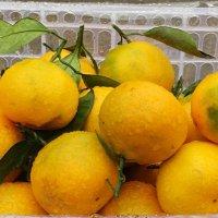 Солнечные  фрукты поднимут настроенье в хмурый день! :: Андрей Заломленков