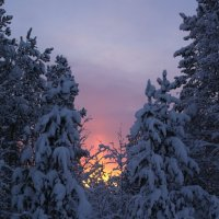 Зимнее волшебство :: Ольга