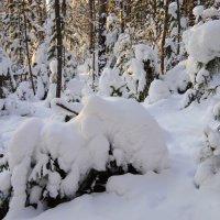 Зимний лес . :: Вера Литвинова
