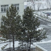 А снег идет, а снег идет... :: Зинаида Каширина