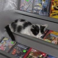 котенок любящий компьютерные игры) :: Владимир Бухаленков