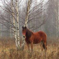 Лошадь у берёзок :: Андрей Снегерёв