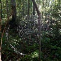 Паутина в лесу :: Ольга И
