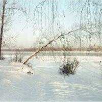Портрет зимы. :: aWa