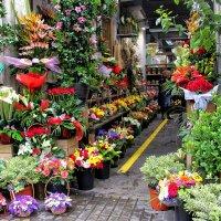 Магазин цветов в районе Эшампле :: Nina Karyuk
