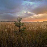 Краски октябрьских закатов :: Лара Симонова