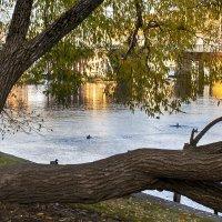 Осень в парке :: Анжела Пасечник