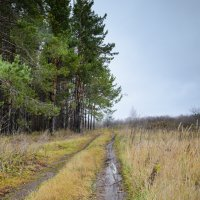 Осенняя дорога :: Ирек Галиуллин