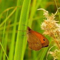 опять про бабочек...57 :: Александр Прокудин